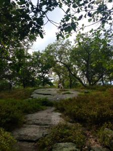 dr-eeks-barnaby-wooded-adventure3