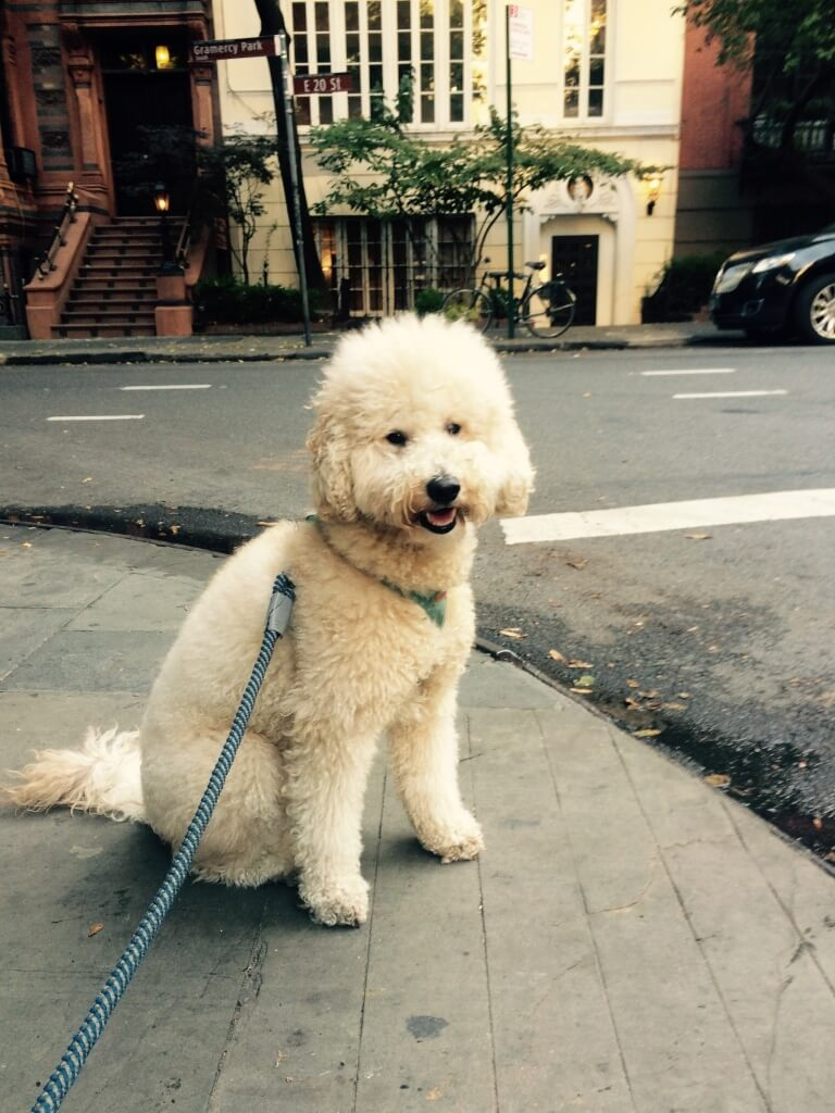How Having a Dog in New York City has Made me Much Healthier and